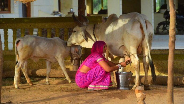 Rural Business Ideas: ग्रामीण क्षेत्र की महिलाएं शुरू कर सकती है दूध का बिजनेस, सरकार भी करेगी मदद, कमाई भी होगी अच्छी