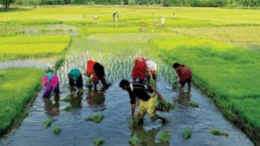 Pradhan Mantri Fasal Bima Yojana: देश के अन्नदाताओं के लिए किसी वरदान से कम नहीं है यह सरकारी योजना, ऐसे मिलता हैं फायदा