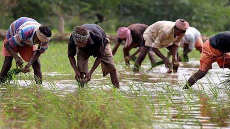 Kisan Diwas 2020: किसान दिवस पर जानिए क्या है Pradhan Mantri Kisan Samman Nidhi Yojana योजना और अन्नदाता इससे कैसे उठा सकते फायदा