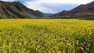 भारत खेती में भी बनेगा आत्मनिर्भर, केंद्र ने शुरू की राष्ट्रीय रबी अभियान 2020- बंपर उत्पादन का अनुमान
