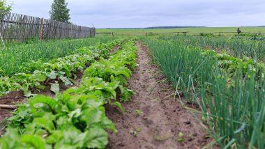 Agriculture Business Ideas: नए साल पर रेगुलर इनकम के लिए शुरू करें खेती से जुड़े ये 4 बिजनेस