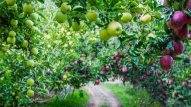 Top Most Profitable Fruit Business: फलों का बिज़नेस ऐसे होगा आपके लिए फायदेमंद