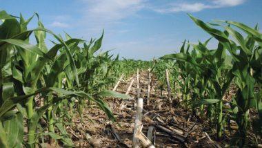 9 Small Agriculture Business Ideas: यह 9 एग्रीकल्चर बिज़नेस आपकी तरक्की में चार चाँद लगा देंगे