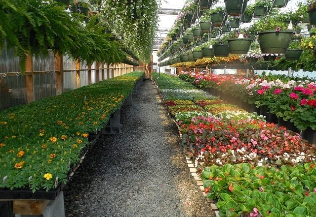 Most Profitable Flower Business: इन Profitable Agriculture Business से घर बैठे होगी अच्छी की कमाई