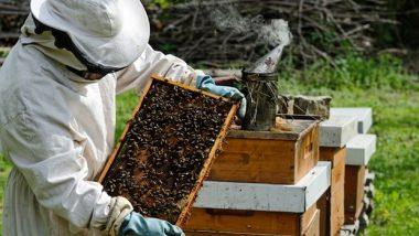 Business Idea For Bee Keeping (Api-Culture): मधुमक्खी पालन के बिज़नेस से होती है मोटी कमाई, जानें मधुमक्खी पालन को शुरू करने के शानदार टिप्स