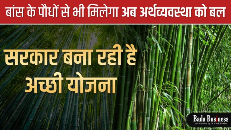 बांस के पौधों से भी मिलेगा अब अर्थव्यवस्था को बल, सरकार बना रही है अच्छी योजना