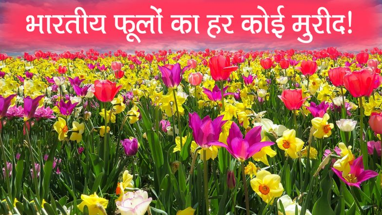 विदेशों में फैल रही भारतीय फूलों की खुशबू, करोड़ों रुपयों के फूल हर साल अमेरिका और खाड़ी देशों में होते है एक्सपोर्ट